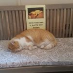 Fulvio, il gatto del Lux
